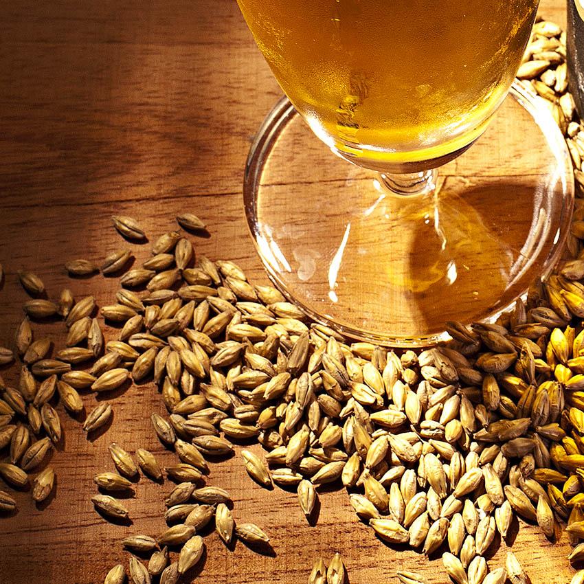 Cerveja boa tem que ser puro malte? Entenda e tire sua conclusão